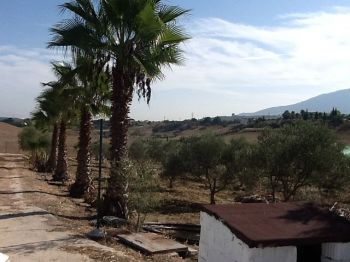 Casa con terreno en La Alquer�a foto 1